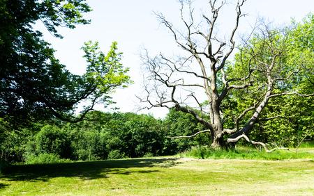 knobby: dead leafless tree
