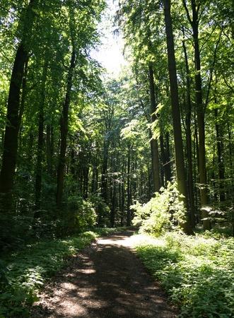 forest path Stock fotó