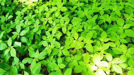 plants on the forest floor Stock fotó - 61418718