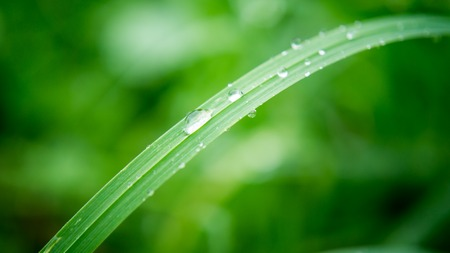 water drops on long blade of grass