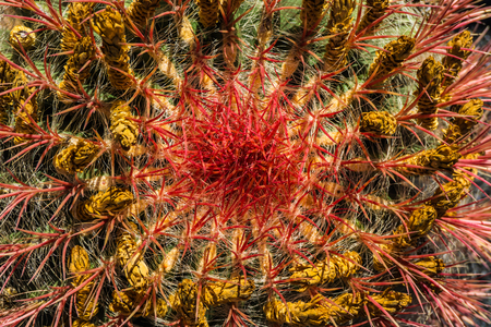 close up cactus 2