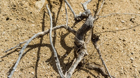 dried roots on sandy beach