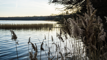 reed grass at the coast of lake Plauer See idyllic landscape Stockfoto
