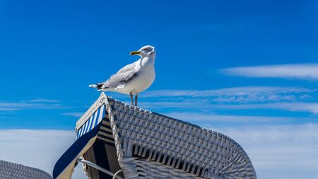 seagull standing on beach chair at baltic sea