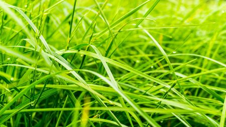 green blades of grass in garden