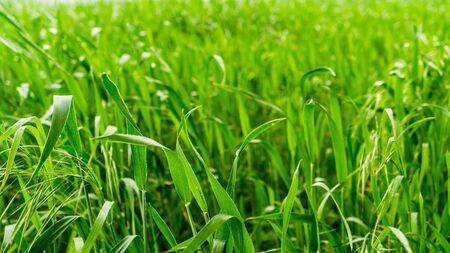 green crop plant on a field