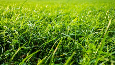 closeup of green grass with dew drops