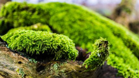 closeup of moss on a dead tree stem Stock fotó