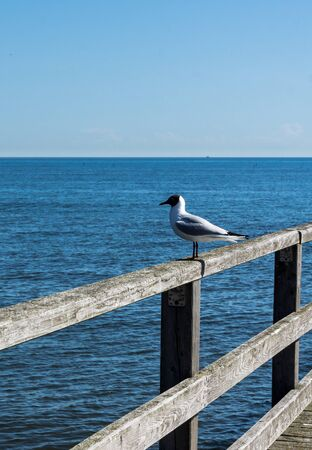 seagull sitting on handrail of a pier