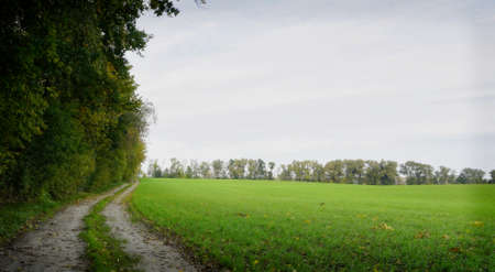 country road with green field and trees