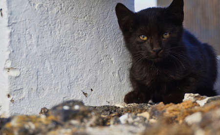 little black cat sitting on a wall