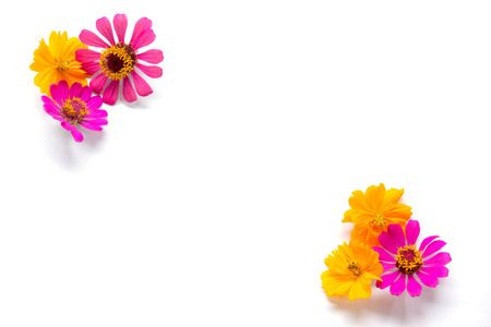 Flowers group on white background, Pink and yellow flowers on backdrop