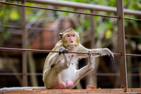 Monkey sitting Absent-minded Stock Photo