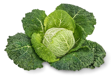 Savoy cabbage photo