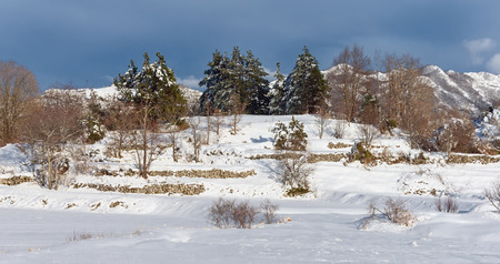 montenegro: Winter trees. Montenegro