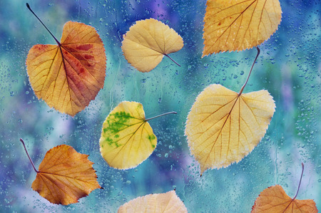 Autumn rainy day. Yellow leaves on a window pane Reklamní fotografie