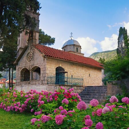 Small church among the hydrangea flowers. Montenegro, Risan town, Orthodox Church of Michael the Archangel