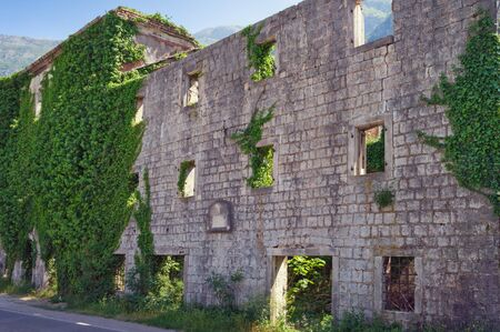 Wall of old ruined building overgrown with green ivy. Montenegro, Risan town