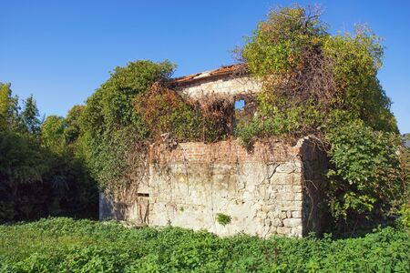 Ruined building.  Abandoned house overgrown with green trees against blue sky on sunny day. Montenegro, Tivat