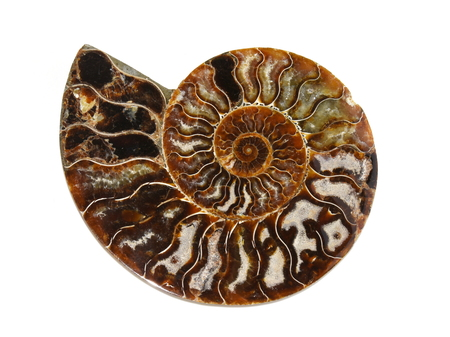 shell of ammonite isolated on white background Stok Fotoğraf