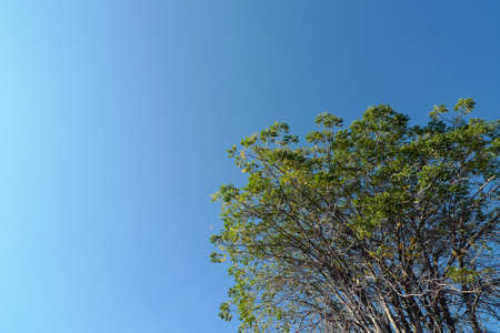 is cloudless: Single  Tree with the cloudless  blue sky Stock Photo