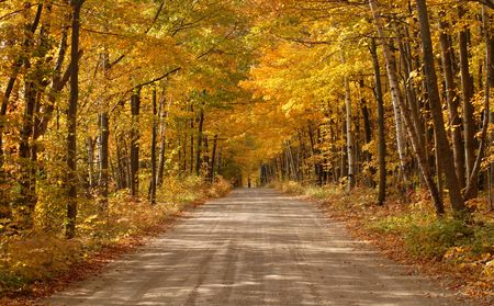 Land pad loopt door het bos op een herfst dag