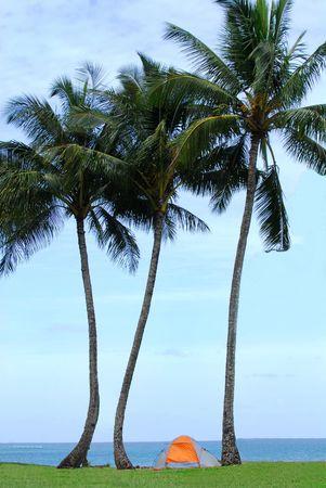 Tent under palm trees on the island of Kauai Hawaii photo