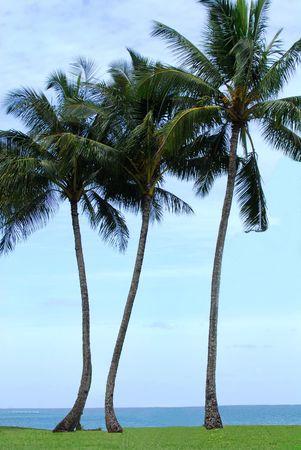 Tent under palm trees on the island of Kauai Hawaii Stock Photo - 3842460
