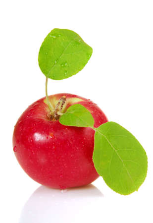 Freshly picked organic apple with leaves and dew drops Stock Photo - 5627599