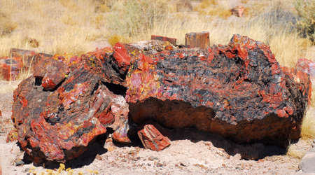 Colorful petrified logs found in the Petrified Forest National Park in Arizona photo