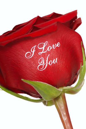 Romantic Red Rose that says I Love You written on it  Stock Photo