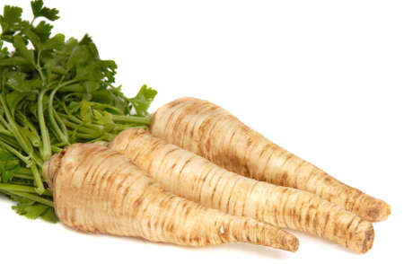 recently: Fresh parsley root recently dug from the ground