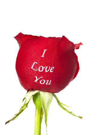 single word: Fresh red rose with the words I Love You embossed on it on a white background