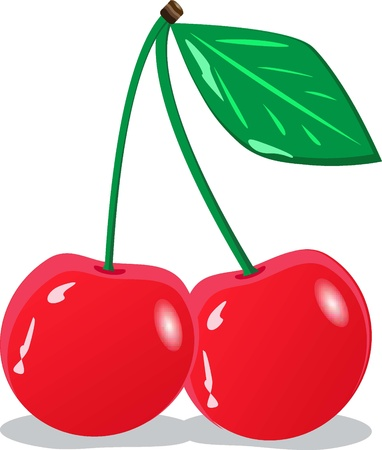 Red cherries. Vector