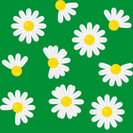 Seamless pattern  with camomile