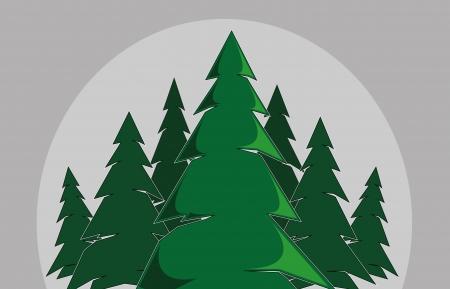 arbol de pino: abeto pino