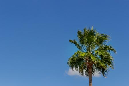 bahama: Beautiful Palm Tree on Grand Bahama Iceland