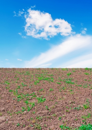 uncultivated: uncultivated field under a blue sky