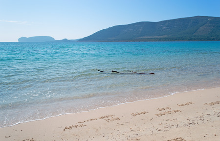 skim: dark driftwood in Mugoni beach, Alghero