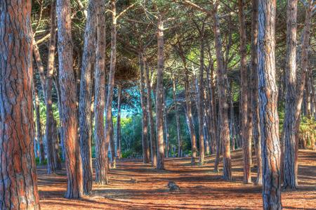 pinewood: pinewood in Maria Pia in Alghero