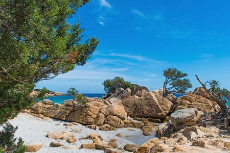 seaweeds: rocks and plants in Capriccioli beach