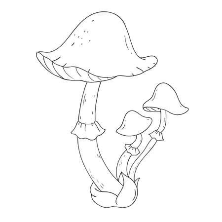 champignons forestiers. Poisonous toadstool de champignons. livre de coloriage vecteur isolé sur fond blanc. Vecteurs