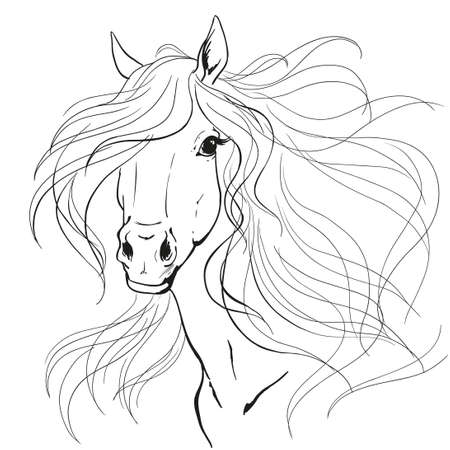 Horse portrait. A horse's mane. Black lines on a white background. Print vector.