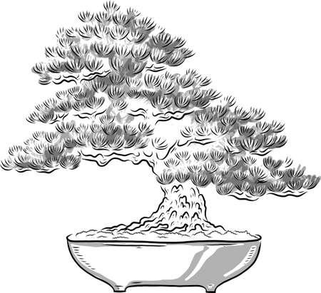 Árbol bonsai. Miniatura de árbol japonés. Silueta de agujas. Pino japonés. Árbol en maceta. Arte japonés. Vector aislado sobre fondo blanco. Ilustración de vector