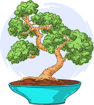 Bonsai in a pot. Color illustration. Japanese bonsai vector isolated on white background. Hand drawing.