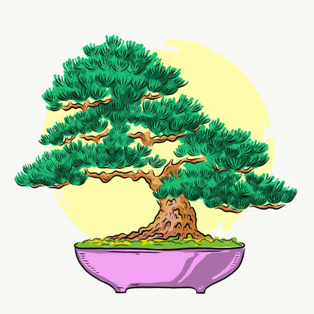 Bonsai in a pot. Mini tree. Color illustration. Bonsai Japanese tree. Vector isolated on white background. Hand drawing. Иллюстрация