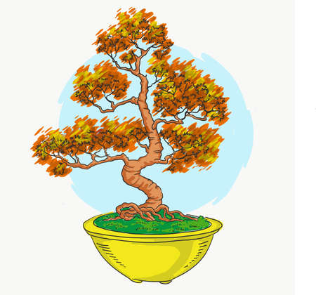 Bonsai in a pot. Japanese art. Mini tree. Color illustration. Bonsai Japanese tree. Vector isolated on white background. Hand drawing. Иллюстрация