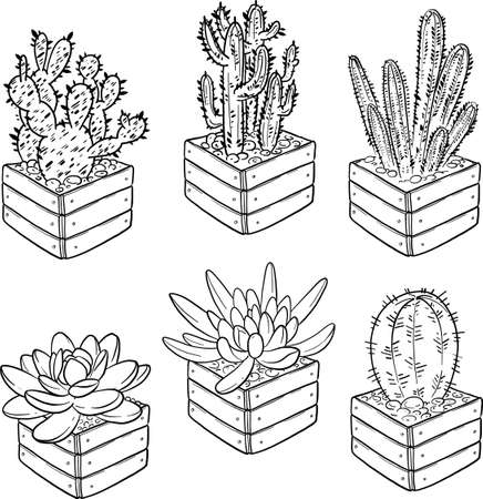 Collection of elements for coloring books. Vector cacti and succulents on a white background. Set of succulents in flower pots.