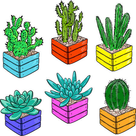A collection of vibrant succulents in flower pots. Cartoon cactus in a wooden pot. Vector illustration on a white background. Bright picture.