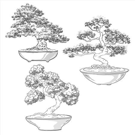 Bonsai collection. Japanese tree miniature. Silhouette of needles. Potted tree. Japanese art. Vector isolated on white background. Vektorové ilustrace